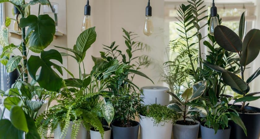 Caring for Indoor Plants: Tips and Tricks